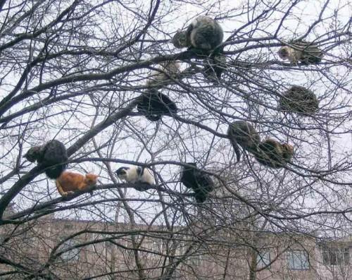 foto divertenti di animali, foto carine di animali,gatti, gatti su albero