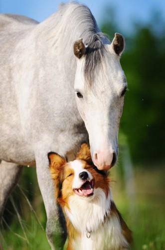 foto divertenti di animali, foto carine di animali, cavallo, cane, cavallo e cane