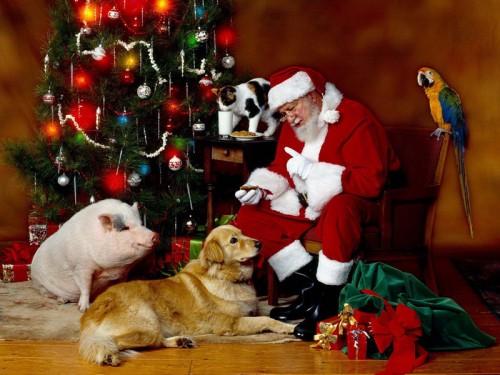 Immagini Divertenti Animali Natale.Immagini Divertenti Animali Natale