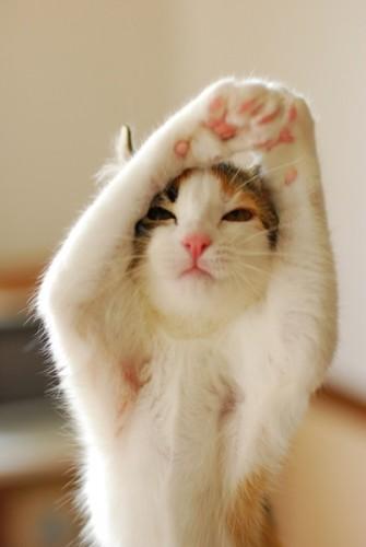 foto divertenti di animali, foto carine di animali, gatto, gatto yoga