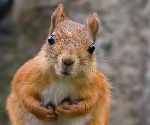 foto divertenti di animali, foto carine di animali, scoiattolo