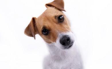 notizie animali, cane, cani, cane puntura insetto