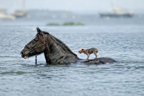 foto divertenti di animali, foto carine di animali, cavallo, cavallo e cane, cane a dorso di cavallo