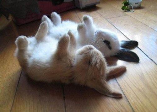 foto divertenti di animali, foto carine di animali, coniglio, conigli, conigli a pancia in su