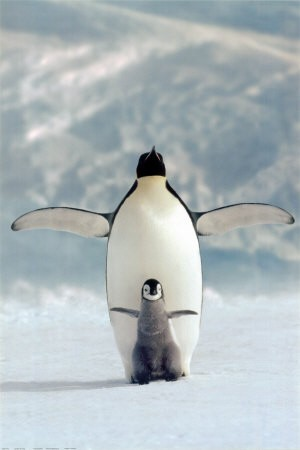 foto divertenti di animali, foto carine di animali, pinguini, pinguino